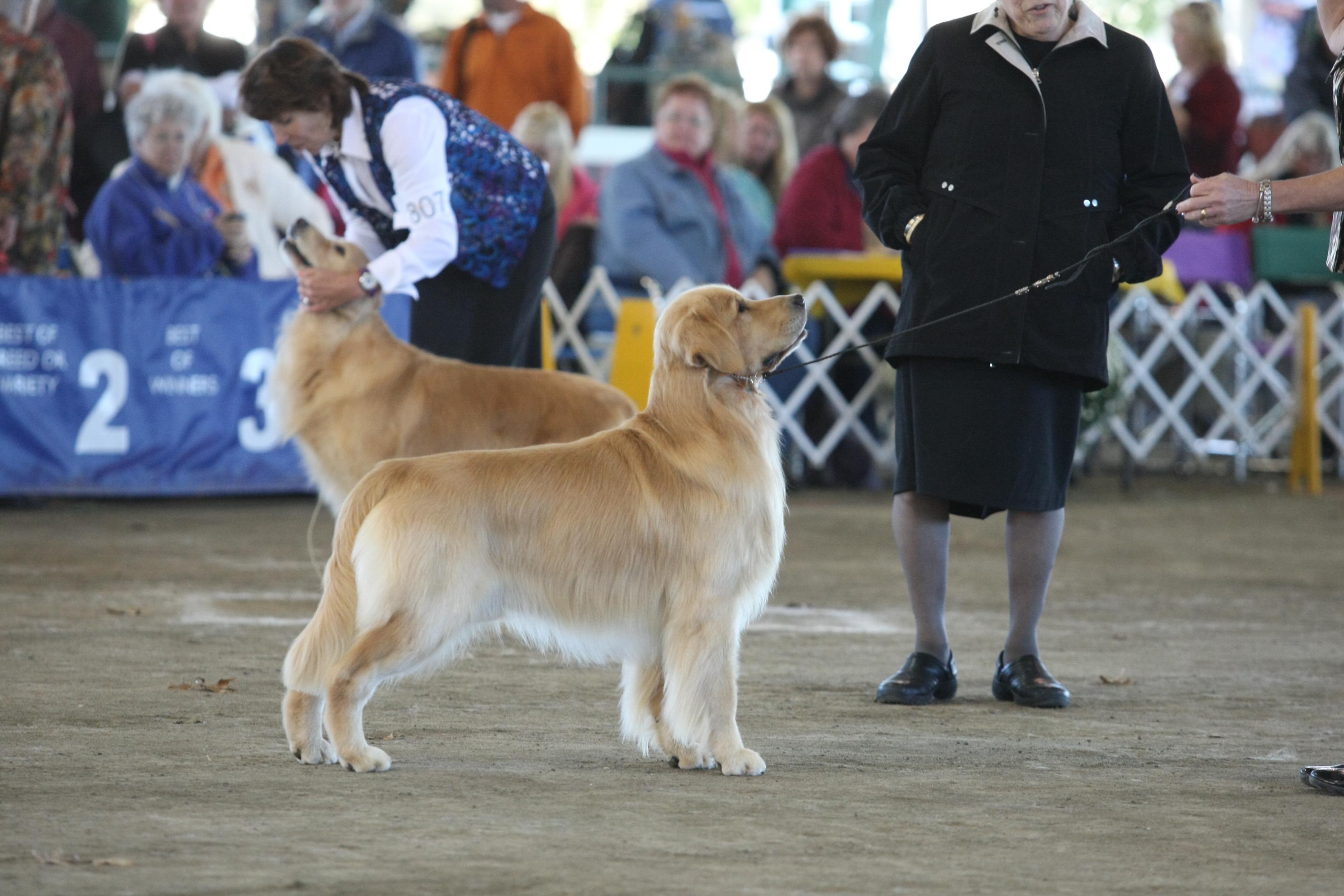 April   West Springfield Dog Show